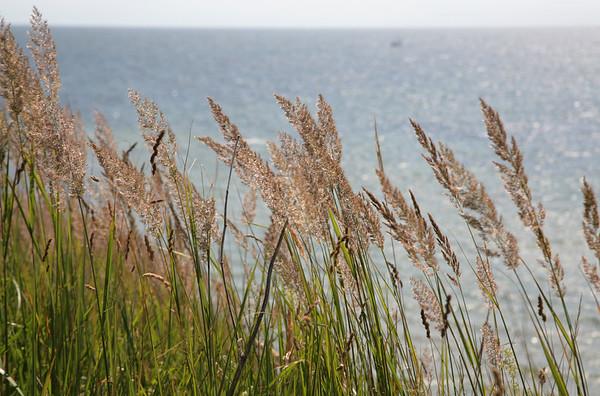 Goehren auf Ruegen, Ostsee, Standhafer