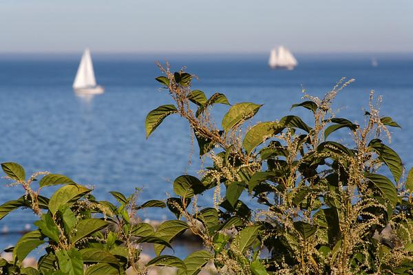 29.09.2011, Kiel;  Gruene Pflanzen / Segelschiffe vor der Hafenmole des Olympiahafens Kiel-Schilksee