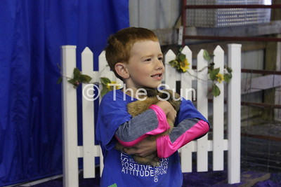 Fair Rabbit Show