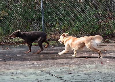 Fairfield Harbour Dog Park