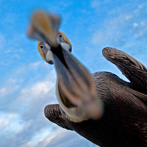 Pelican Ate My Camera Fairhope AL_2534