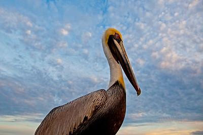 Pelican Fairhope AL_2542