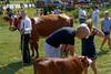 2013 Hardwick Fair, Hardwick, MA.