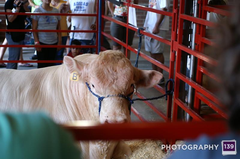Iowa State Fair - 2008