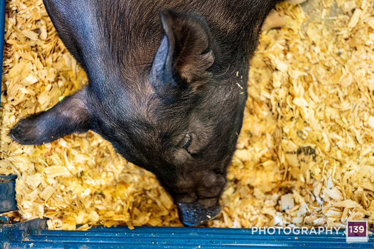 Boone County Fair - 2021