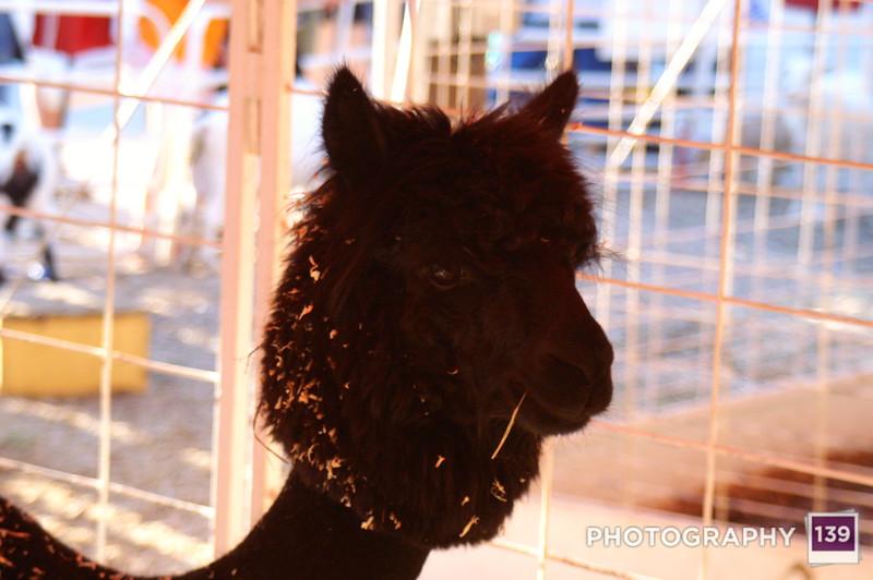 Iowa State Fair - 2006