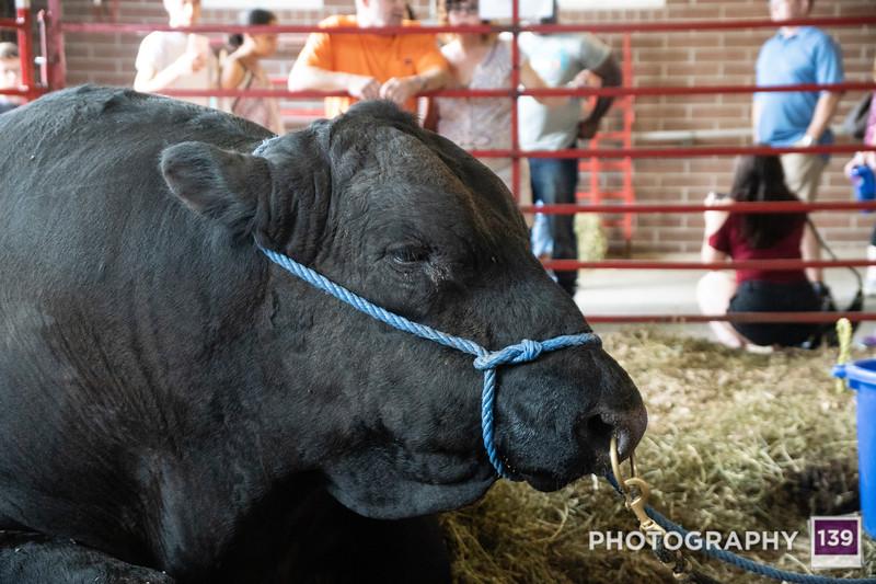 Iowa State Fair - 2017