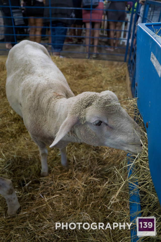 Minnesota State Fair - 2019