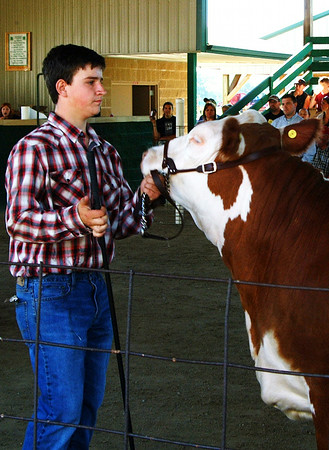 Christopher Aune | The Herald-Tribune<br /> With so many human and animal competitors, the Franklin County 4-H Fair Beef Show went on for hours.