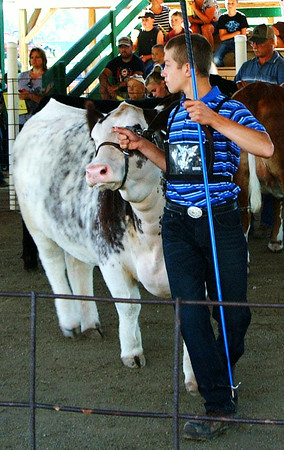 Christopher Aune | The Herald-Tribune<br /> Dave Kunz's animal was the champion in two classes, Commercial Heiferand County Born Commercial Heifer.
