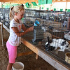 Diane Raver | The Herald-Tribune<br /> Tori Wuestefeld, 9, Brookville, feeds her rabbits.