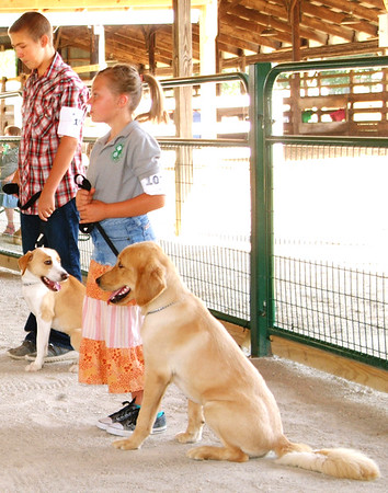 Debbie Blank | The Herald-Tribune<br /> Brookville Greyhounds 4-H Club member Lane Westerman (from left), 12, Brookville, and Ginger, a Labrador and border collie mix; and Four Paws Dog Club member Naarah Lienesch, 9, Brookville, and golden Retriever Solomon take part in the Franklin County 4-H Dog Show's obedience category.