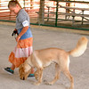 Debbie Blank | The Herald-Tribune<br /> Four Paws Dog Club member Naarah Lienesch, 9, Brookville, and golden Retriever Solomon take part in the dog show's obedience category.