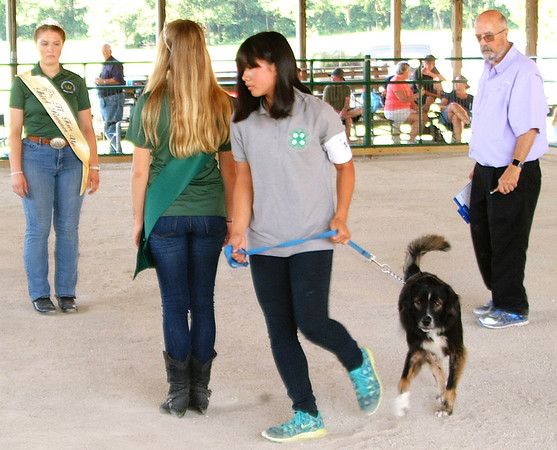 Debbie Blank | The Herald-Tribune<br /> Zora Allstatter (center), 13, Liberty, and her Labrador retriever and shepherd mix Favor prepare to walk in a figure 8 around fair Queen Ingrid Miller (back to camera), Brookville, and pageant third runner-up Alexa Brehm, Cedar Grove, as judge Ron Gibson watches.