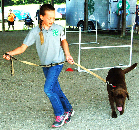 "Debbie Blank | The Herald-Tribune<br /> Four Paws Dog Club member Elizabeth Schuster, 11, West Harrison, puts her chocolate Labrador retriever Rey, 3, through the Beginner A agility course. Judge Ron Gibson told her, ""I want you to keep working ... Good job!"""