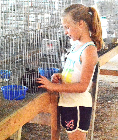 Diane Raver | The Herald-Tribune<br /> As Kodie Cox, 7, Brookville, walked through the rabbit venue, she stopped to get a close-up view of one of the animals.