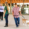 Debbie Blank | The Herald-Tribune<br /> Brookville Greyhounds 4-H Club member Lane Westerman, 12, Brookville, and Ginger, a Labrador and border collie mix, walk around Queen Ingrid Miller while Ron Gibson keeps score during the obedience portion of the Franklin County 4-H Dog Show July 13.