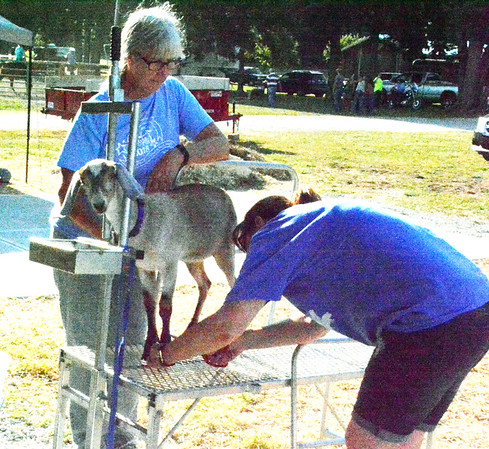 Diane Raver | The Herald-Tribune<br /> Shirley Schalk keeps an eye on Jazzy the goat as Brandy Jacob trims the animal's toenails.