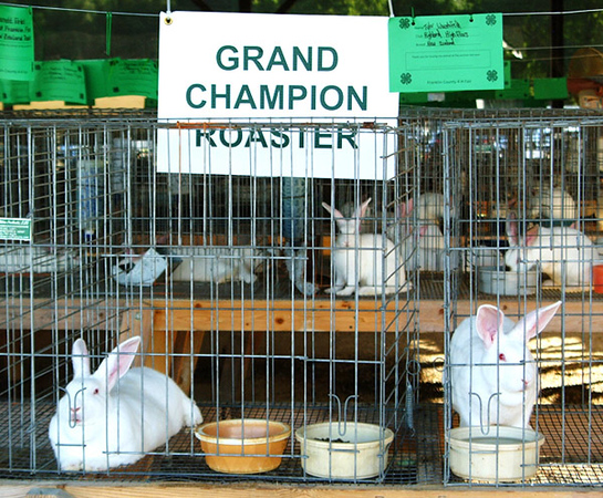 Debbie Blank | The Herald-Tribune<br /> Many white rabbits enjoyed watching the pie-eating contest.