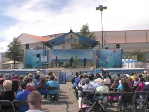 Clips from Sea Lion Splash