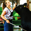"Debbie Blank | The Herald-Tribune<br /> Madison Thompson received the Champion Simmental Heifer honor. Judge Greg Johnson reported, ""I think she's really powerful. You'd have to be careful what you breed this cow to."""