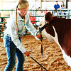 "Debbie Blank | The Herald-Tribune<br /> Reese Obendorf's Hereford heifer had ""not quite as long a stride"" as another calf."