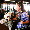 Debbie Blank | The Herald-Tribune<br /> Kylee Weber's Hereford heifer was named Reserve Champion.