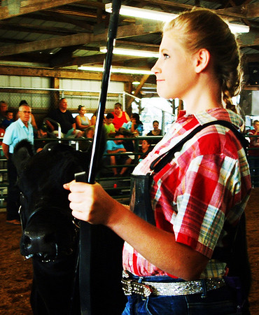 "Debbie Blank | The Herald-Tribune<br /> Brooke Heaton gained the Reserve Champion Angus Heifer ribbon after showing this calf. ""She's long as a freight train,"" decided the judge, calling the heifer athletic."