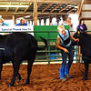 "Debbie Blank | The Herald-Tribune<br /> Chloe Hunter (left) and Julia Meyer competed in the Angus heifer category. ""We've got to appreciate these females,"" announced the 35-year judge."