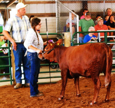Debbie Blank | The Herald-Tribune<br /> Sarah Hartman shows her red Angus. Assisting with the show is (background) Adam Franklin.