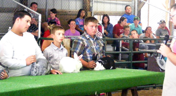 Will Fehlinger | The Herald-Tribune<br /> Ripley County 4-H'ers listen intently to the judge's instructions during the Rabbit Show July 24 in Osgood.