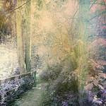 On my way to Fairyland