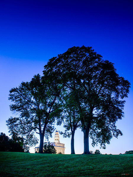 Nauvoo Temple Trees
