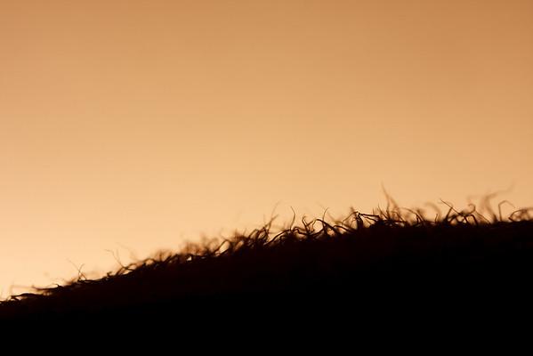 Sunrise over the kiwi scrub hills