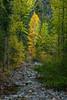 Robinson Creek-Methow Valley
