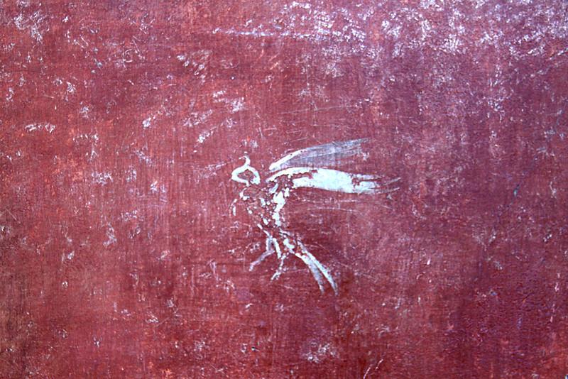 Fresco on the walls of Pompeii. A hooded Falcon
