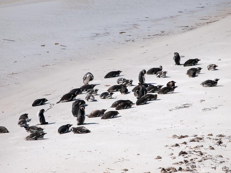 Penguinos