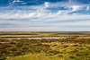 The peat bogs of East Falkland Island, British Overseas Territory.