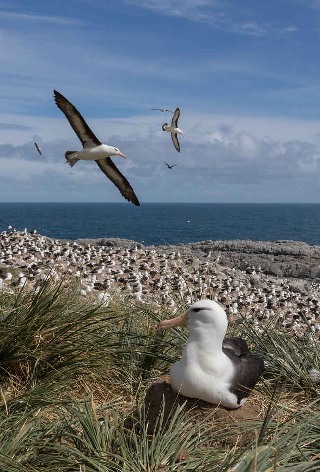 What a privilege to be able to be so close to birds on their nests....