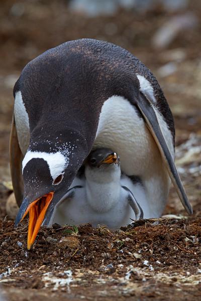 Falkland Islands Sojourn, 2013