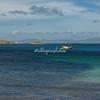Port Pattison, Carcass Island