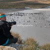 Photographing the penguins at Leopard Beach, Carcass Island