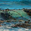 Giant Kelp Plants