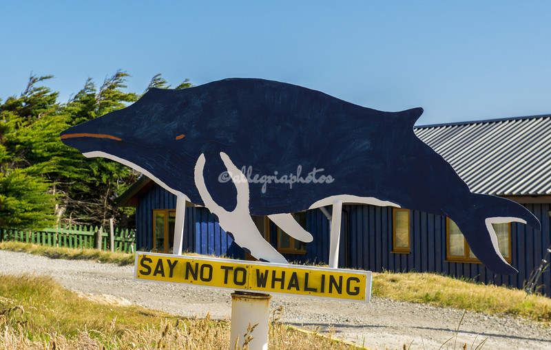 Stanley says NO to whaling