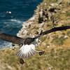 Black browed albatross and rockhopper penguins