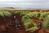 Cinq manchots papous rejoignant leur colonie sur Sea Lion Island/ Iles Falkland (Iles Malouines)