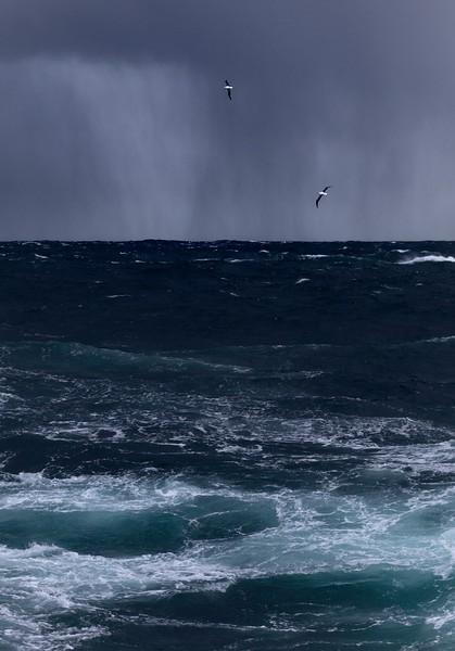 Albatrosses flying over the Scotia Sea