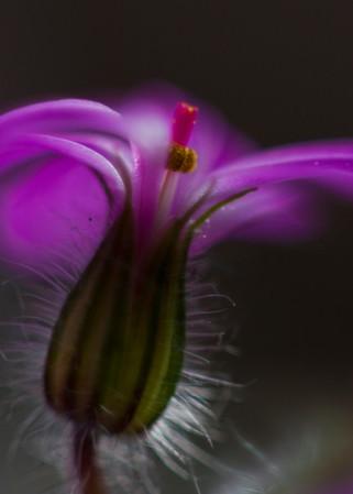 Small flower in Dark background