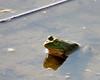 Frog @ Glacier Ridge MP