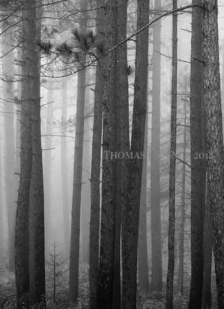 Honeymoon Trail Fog